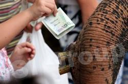 Чаевые в Тайланде - сколько оставлять