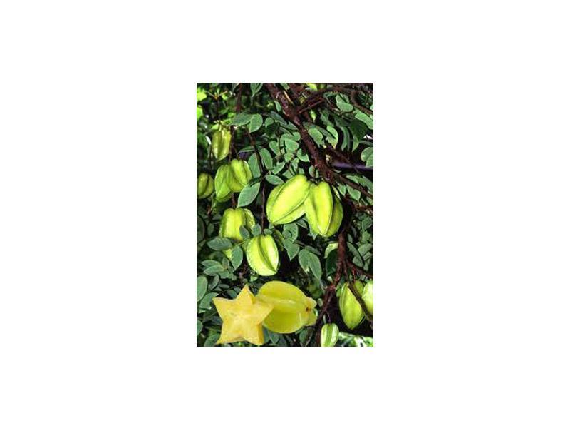 Фрукты Тайланда: Карамбола - уникальный экзотический фрукт