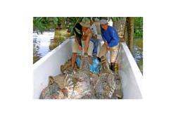 Есть ли в тайланде крокодилы