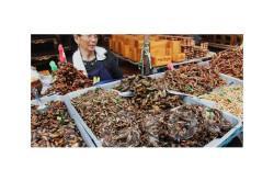Жареные насекомые в Тайланде