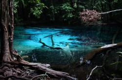emerald-pool-krabi20