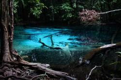 emerald-pool-krabi20