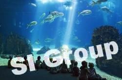 aquarium_phuket (8)