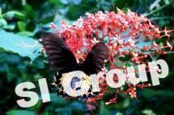 butterfly_garden_phuket (2)