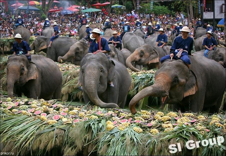 День слона