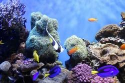 footer-underwater