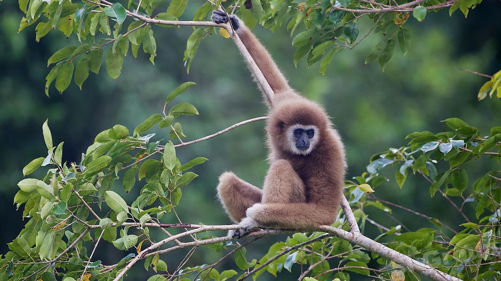Kaeng Krachan национальный парк Тайланда