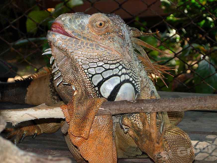 Уникальные животные Тайланда 2
