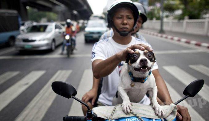 Животные Тайланда