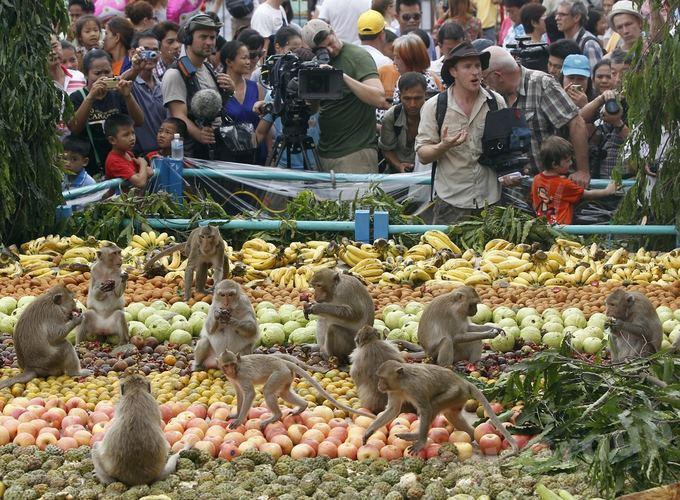 День обезьян в Тайланде
