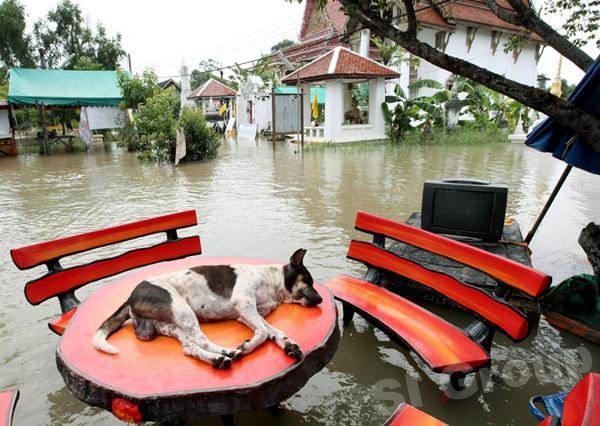 Тайланд — страна счастливых животных