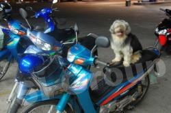 Тайланд - страна счастливых животных
