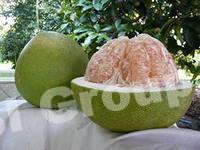 Pomelo (in Thailand - Som-oh)