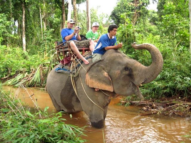 Safari in Phuket
