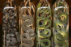 Тайская народная медицина – это огромная совокупность полезных веществ. Среди которых есть мешочки с травой для массажа, различные бальзамы и настойки