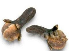 Гвоздика Clove (Evgenia Caryophyllus) Thai : Kanploo Season: All year round Availability: dry seed end powder Packaging: Plastic bag