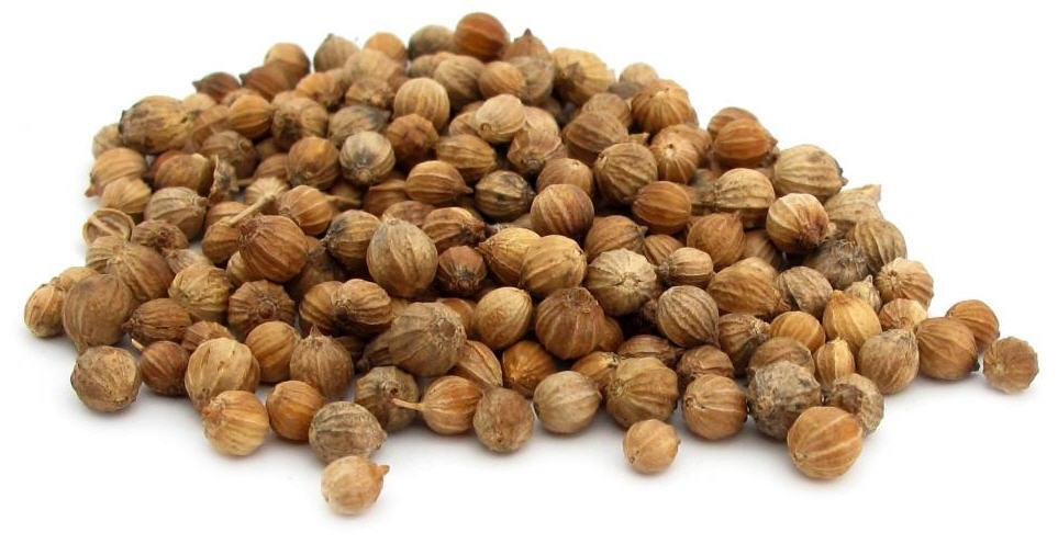 Кориандр семя Coriander seed (Coriandrum sativa linn) Thai : Med pakchee Season: All year round Availability: dry seed end powder Packaging: Plastic bag and glass jar