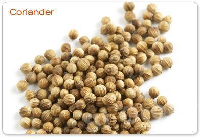 Кориандр семя Coriander seed (Coriandrum sativa linn) Thai : Med pakchee Season: All year round Availability: dry seed end powder Packaging: Plastic bag and glass jar