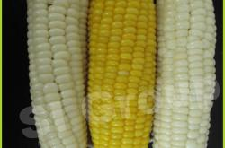 Кукуруза белая сладкая Sweet Corn and White Corn Thai : Kao Pod Season: All year round Availability: Cooked and Frozen Packaging: plastic bag and master carton