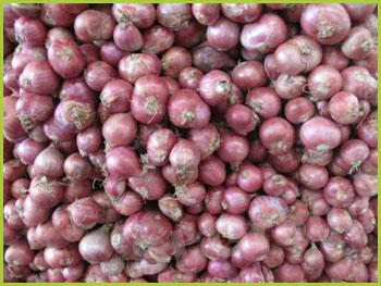 Лук шалот (ашкелонский) Shallot Thai : Homdaeng Season: All year round Availability: Fresh and Frozen Packaging: As per customer request