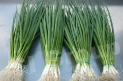 Лук зеленый Green Shallot Thai : Tonhom Season: All year round Availability: Fresh and Frozen Packaging: As per customer request