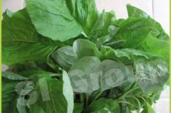 Шпинат китайский Chinese Spinach Thai : Pakkhom Season: All year round Availability: Fresh and Frozen Packaging: As per customer request