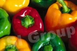 Сладкий перец болгарский Sweet bulgarian pepper Thai : Plikwan Season: All year round Availability: Fresh and Frozen Packaging: As per customer request