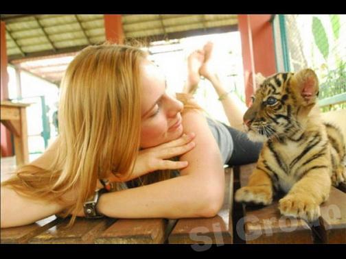 Экскурсии на Пхукете: Королевство тигров или Tiger Kingdom Phuket