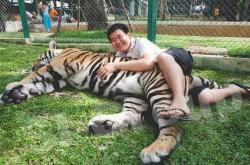 Экскурсии на Пхукете - Королевство тигров