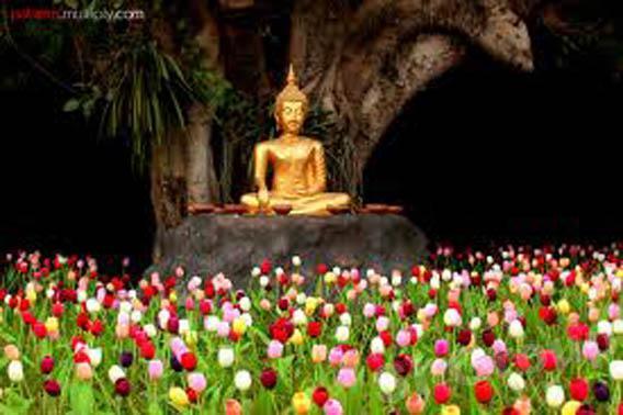 Экскурсии Чианг Май: Храм Пан Тао (Wat Pan Tao)
