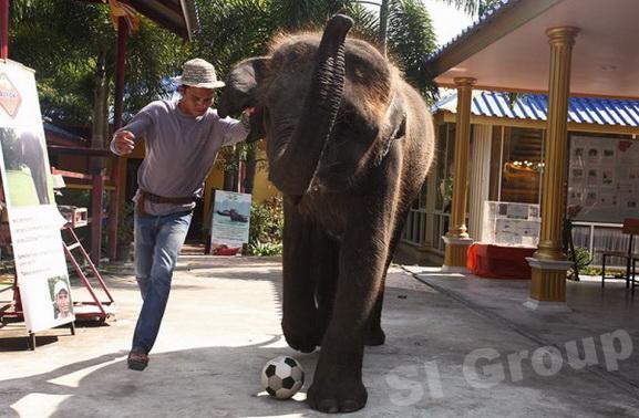 слоновий питомник в Хуа Хин