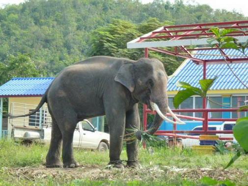 Слоновий секс