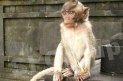 Гора обезьян в Хуа Хин (Takiab)