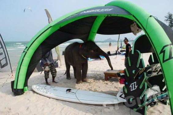 Кайтсерфинг в Таиланде