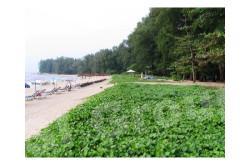 Nai Yang Beach (Nai Yang Beach)