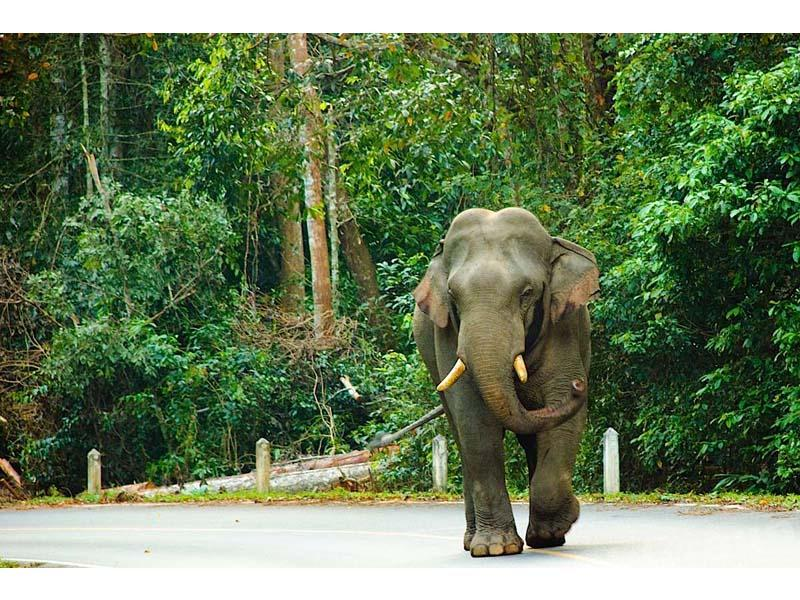 Парк в Таиланде. ТОП-3 парков Таиланда