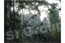 Парк в Таиланде