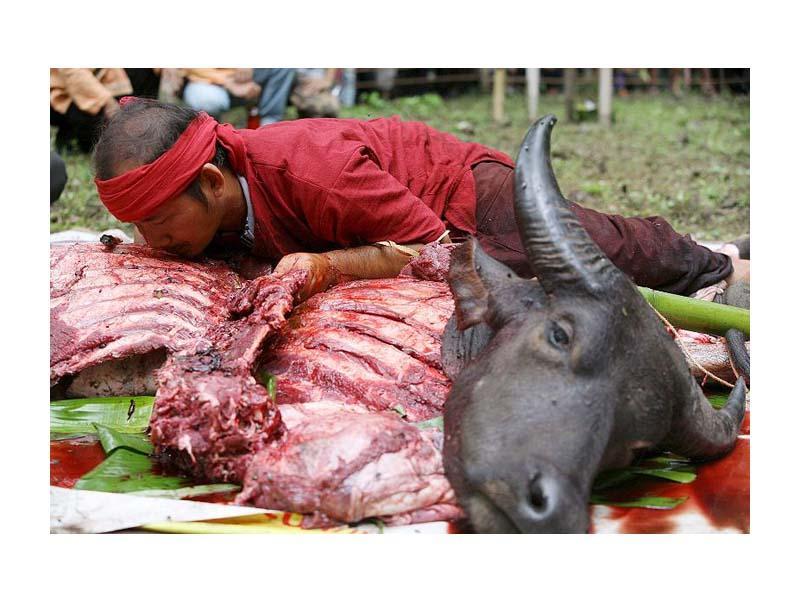 Таиланд. Кровавый ритуал