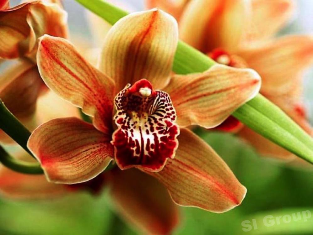 fleurs Thaïlande Thaïlande