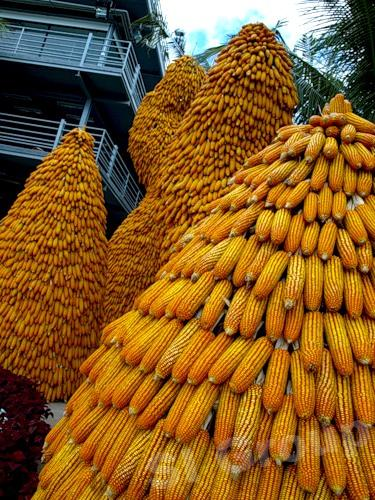 Кукуруза - импорт / экспорт Тайланд