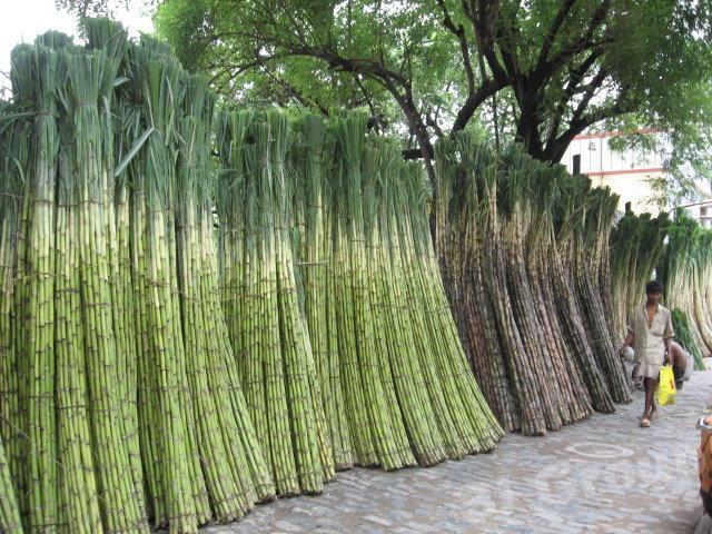 сахарный тростник - импорт / экспорт Тайланд