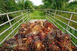 пальмовое масло - импорт / экспорт Тайланд