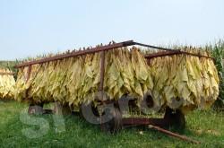 Табак - импорт / экспорт Тайланд