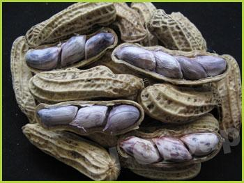 Арахис не очищенный в скорлупе Peanut  Thai : Tualisong Season: All year round Availability: Fresh and Frozen Packaging: As per customer request