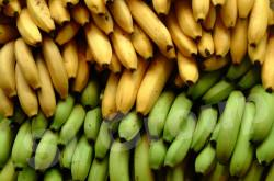 Банан Banana Thai (тайское название): Kuay Hom, Kuay Nam Wah, Kuay Kai Season (сезонность): all year round Availability (вид): Fresh and Frozen Packaging (упаковка): Tray or Carton Box