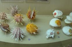 Видео - Музей морских Ракушек