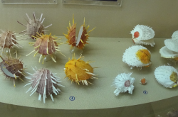 Video - The museum of seashells