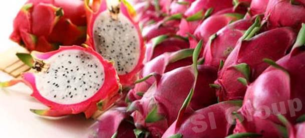 Драгонфрут, питайя Dragonfruit Thai (тайское название): Kaomangkorn Season (сезонность): All year round Availability (вид): Whole Fresh and Peeled Frozen Packaging (упаковка): Tray or Carton Box
