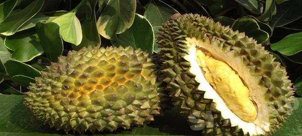 Дуриан Durian Thai (тайское название): Thu Rian Season (сезонность): April - August Availability (вид): Fresh, Whole Frozen, Frozen meat Packaging (упаковка): Tray or Carton Box