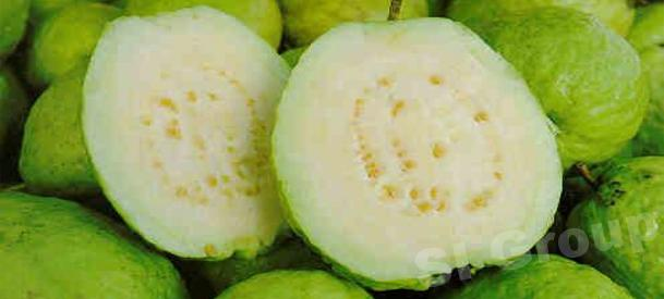 Гуава Guava Thai (тайское название): Farang Season (сезонность): all year round Availability (вид): Fresh and Frozen Packaging (упаковка): Tray or Carton Box